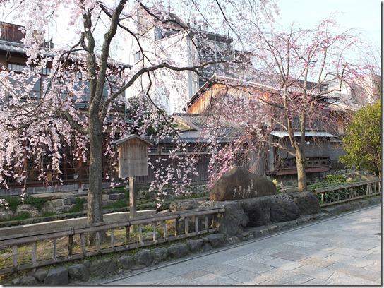 2017京都桜 733