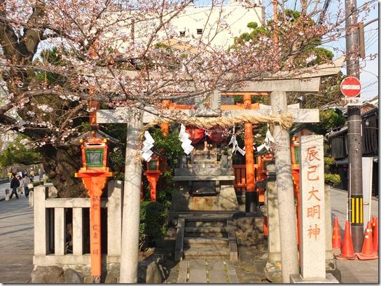 2017京都桜 739