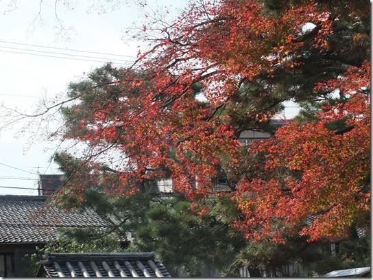 2016京都紅葉 742