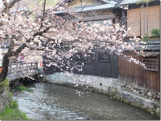 2017京都桜 744