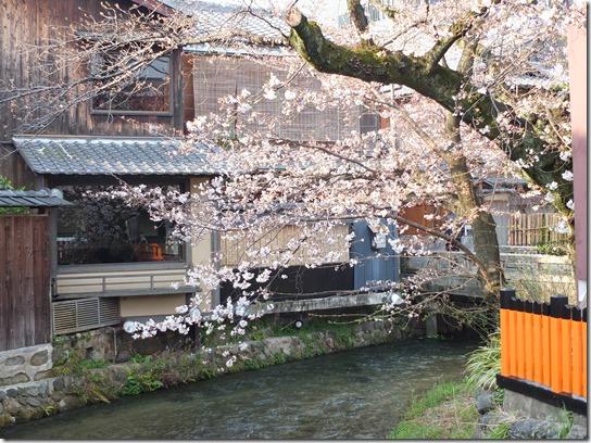 2017京都桜 746