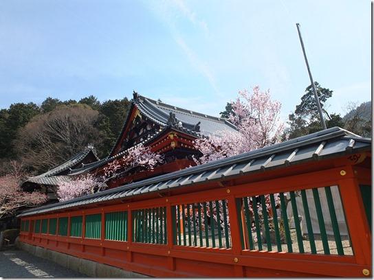 2017京都桜 788
