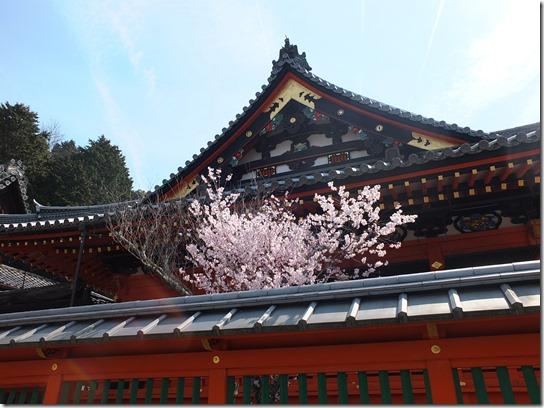 2017京都桜 789