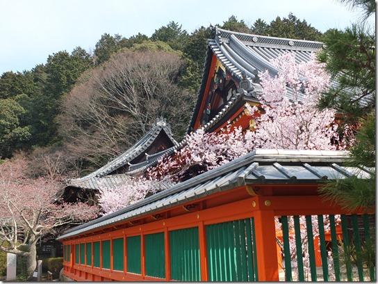 2017京都桜 808