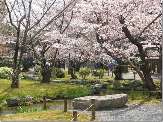 2017京都桜 817