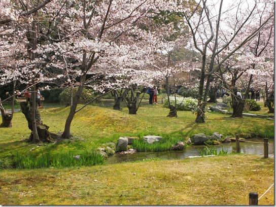 2017京都桜 818