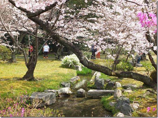 2017京都桜 822