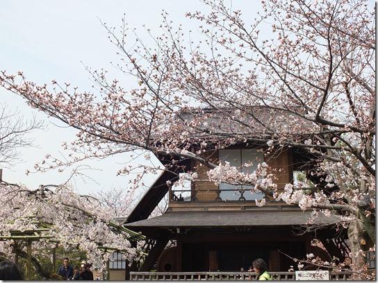 2017京都桜 842