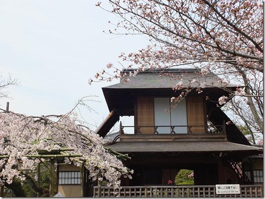 2017京都桜 847