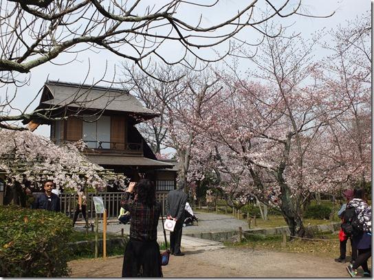 2017京都桜 850