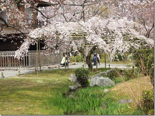 2017京都桜 853