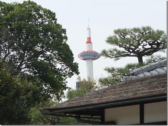 2017京都桜 865