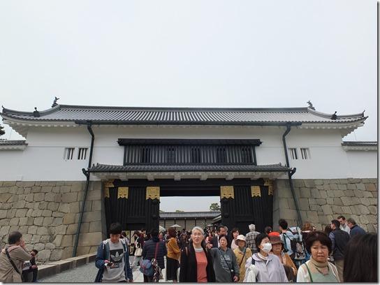 2017京都桜 881