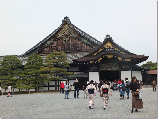 2017京都桜 884