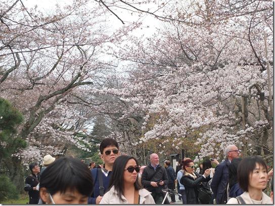2017京都桜 929