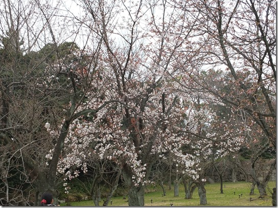 2017京都桜 933