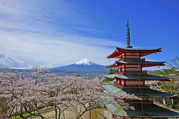 3391富士山と桜の絶景! 新倉山浅間公園&山中湖水陸両用バス「KABA」