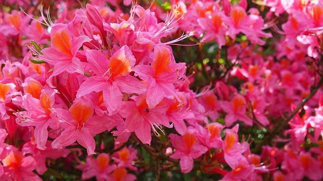 3394箱根つつじの名庭めぐり 小田急山のホテル&ホテル花月園