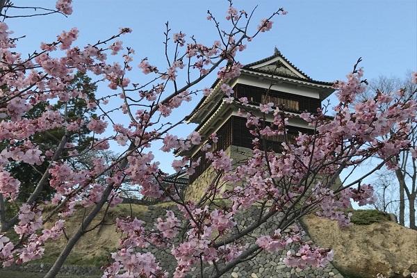 3378上田城千本桜まつりと一目十万本千曲市あんずの里のお花見