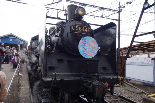 3546大井川鉄道SL列車で行く!春の風物詩!家山の桜並木