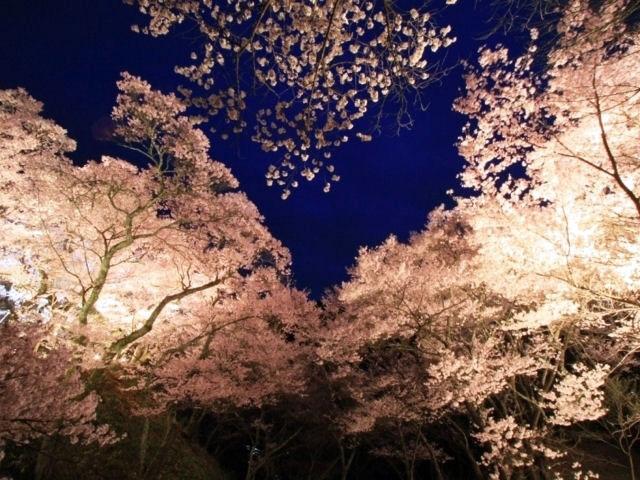 3577高遠城址公園信州伊那高遠さくら祭り【夜桜便】