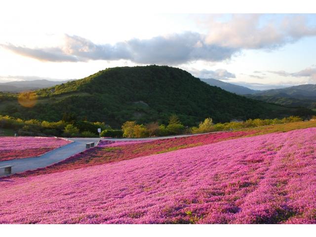 3740茶臼山高原芝桜の丘&満蒙開拓平和記念館